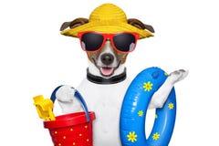 Perro de la playa del verano fotografía de archivo