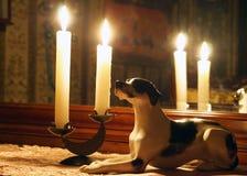 Perro de la porcelana en el interior con las velas Imágenes de archivo libres de regalías