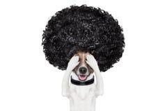 Perro de la preparación en los peluqueros Fotografía de archivo libre de regalías