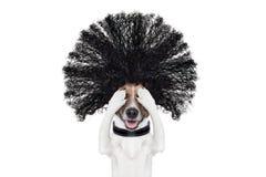 Perro de la preparación en los peluqueros Imagen de archivo