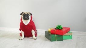 Perro de la raza fregonas en un traje del reno El perro que lleva un suéter rojo-blanco, sentándose al lado de presentes Feliz Na almacen de metraje de vídeo