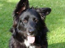perro de la señora imágenes de archivo libres de regalías