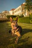 Perro de la seguridad imagen de archivo libre de regalías