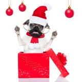 Perro de la sorpresa de la Navidad Imagen de archivo