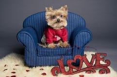 Perro de la tarjeta del día de San Valentín Foto de archivo libre de regalías