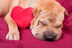 Perro de la tarjeta del día de San Valentín Foto de archivo