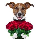 Perro de la tarjeta del día de San Valentín Imagen de archivo