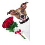 Perro de la tarjeta del día de San Valentín Fotos de archivo libres de regalías