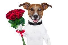 Perro de la tarjeta del día de San Valentín Fotos de archivo