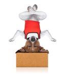 Perro de la yoga Foto de archivo libre de regalías