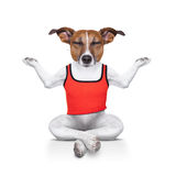 Perro de la yoga Imagenes de archivo