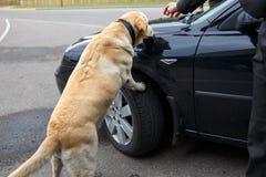 Perro de las aduanas del labrador retriever Fotografía de archivo libre de regalías