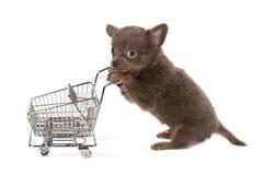 Perro de las compras Imagen de archivo