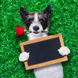 Perro de las tarjetas del día de San Valentín Fotografía de archivo libre de regalías