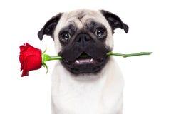Perro de las tarjetas del día de San Valentín Imagenes de archivo