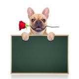 Perro de las tarjetas del día de San Valentín Imagen de archivo