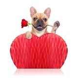 Perro de las tarjetas del día de San Valentín Fotos de archivo libres de regalías