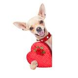 Perro de las tarjetas del día de San Valentín Imágenes de archivo libres de regalías