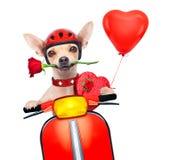 Perro de las tarjetas del día de San Valentín Fotografía de archivo