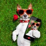 Perro de las tarjetas del d?a de San Valent Imagen de archivo libre de regalías