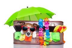 Perro de las vacaciones de verano Imagen de archivo libre de regalías