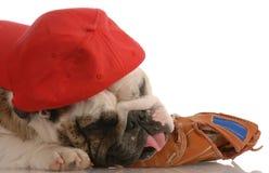 Perro de los deportes fotos de archivo