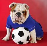 Perro de los deportes Imagen de archivo libre de regalías