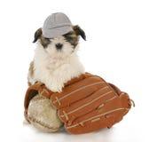 Perro de los deportes Imagenes de archivo