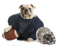 Perro de los deportes Foto de archivo