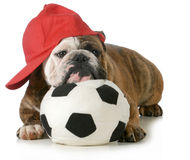 Perro de los deportes Imagen de archivo