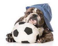 Perro de los deportes Imágenes de archivo libres de regalías