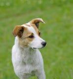 Perro de los jóvenes de Фdorable Foto de archivo