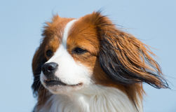 Perro de los jóvenes del retrato Foto de archivo libre de regalías