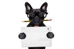 Perro de los posts del reparto del correo fotos de archivo libres de regalías