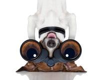 Perro de los prismáticos Imagen de archivo