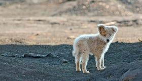 Perro de los tugurios Foto de archivo