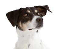 Perro de mirada curioso imagen de archivo libre de regalías