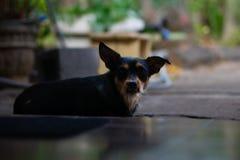 Perro de mirada gru??n que se sienta en el umbral foto de archivo libre de regalías