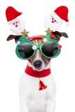 Perro de Navidad Fotografía de archivo