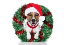 Perro de Navidad Imágenes de archivo libres de regalías