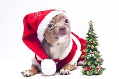 Perro de Navidad con el árbol Fotografía de archivo libre de regalías