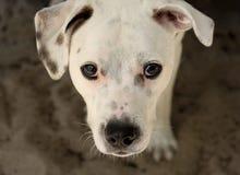 Perro de observación Imagen de archivo libre de regalías
