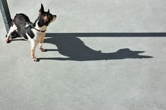 Perro de observación del perro imagen de archivo