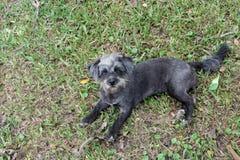 Perro de Osa Female Imágenes de archivo libres de regalías