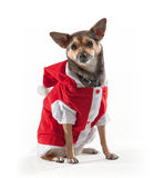 Perro de Papá Noel Foto de archivo libre de regalías