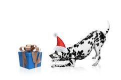 Perro de Papá Noel cerca del regalo del Año Nuevo Fotos de archivo libres de regalías