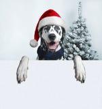 Perro de Papá Noel con la bola de la Navidad en la pata y una campana Imágenes de archivo libres de regalías