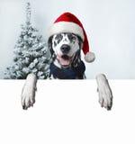 Perro de Papá Noel con la bola de la Navidad en la pata y una campana Fotografía de archivo libre de regalías