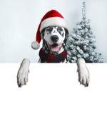 Perro de Papá Noel con la bola de la Navidad en la pata y una campana Foto de archivo