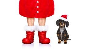 Perro de Papá Noel el días de fiesta de la Navidad Fotografía de archivo libre de regalías